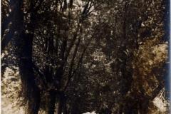 mapleavenue01